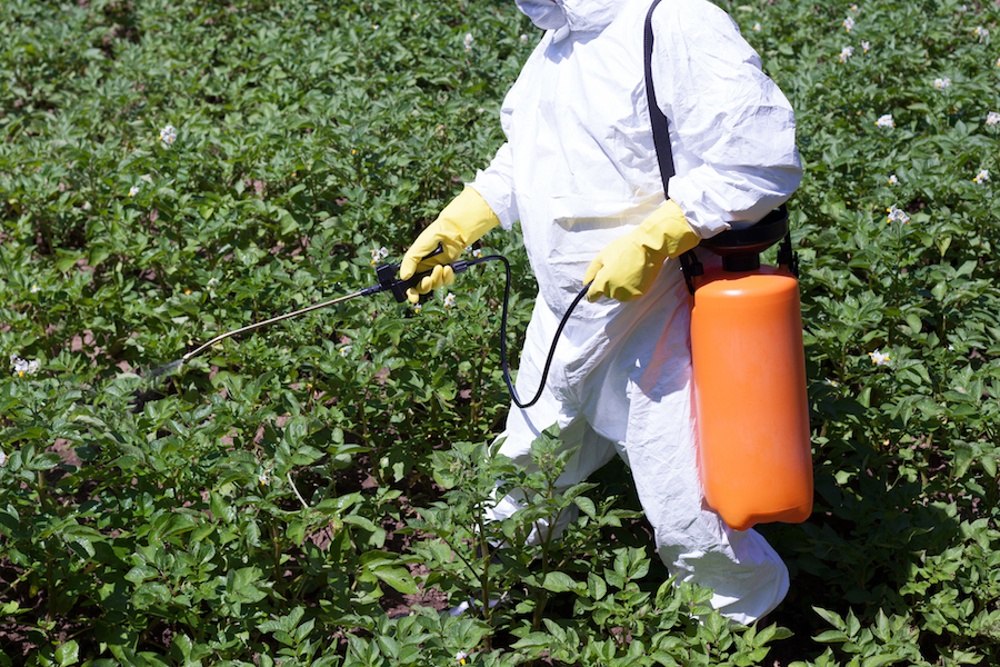 farmer spraying pesticides on crops white suit gloves