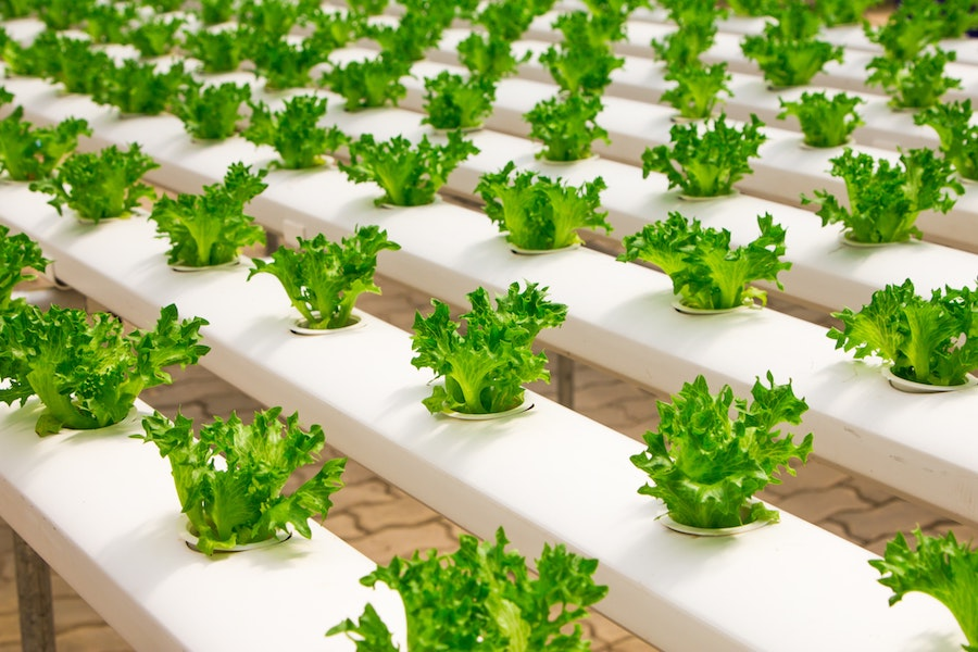 The Benefits of Vertical Farming and How You Can Get Started